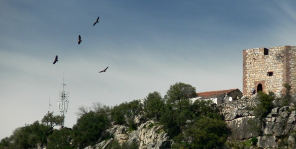 Vultures flying near the castle